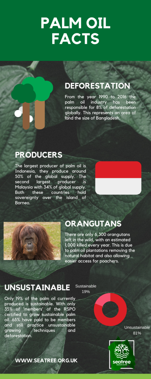 Can palm oil be sustainable? palm oil facts infographic