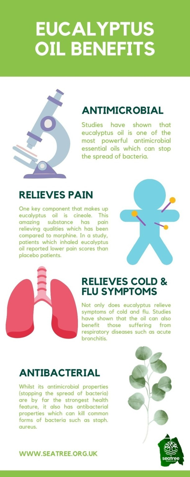 eucalyptus oil benefits infographic